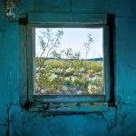 Window with Creosote Bush - Dunmovin, CA - 2010